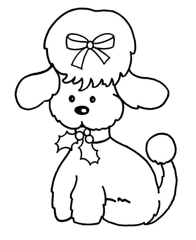 Раскраска Милашка пудель Скачать Животные, собака.  Распечатать ,Животные,