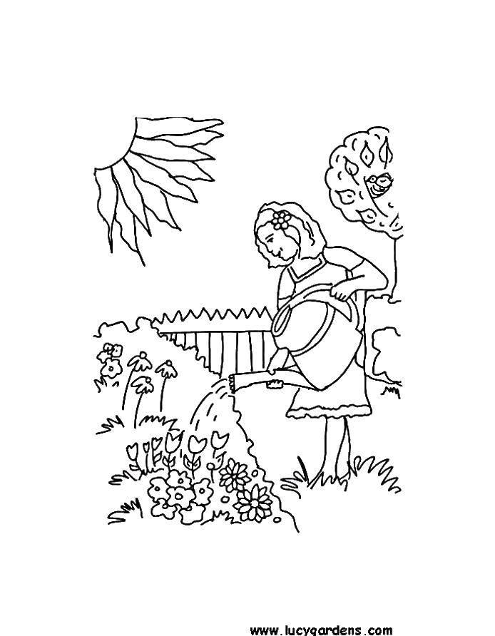 Раскраска Поливаем цветы Скачать Лейка, сад.  Распечатать ,лейка,