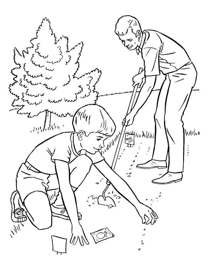 Раскраска огород Скачать ,деревья, дерево, листва,.  Распечатать