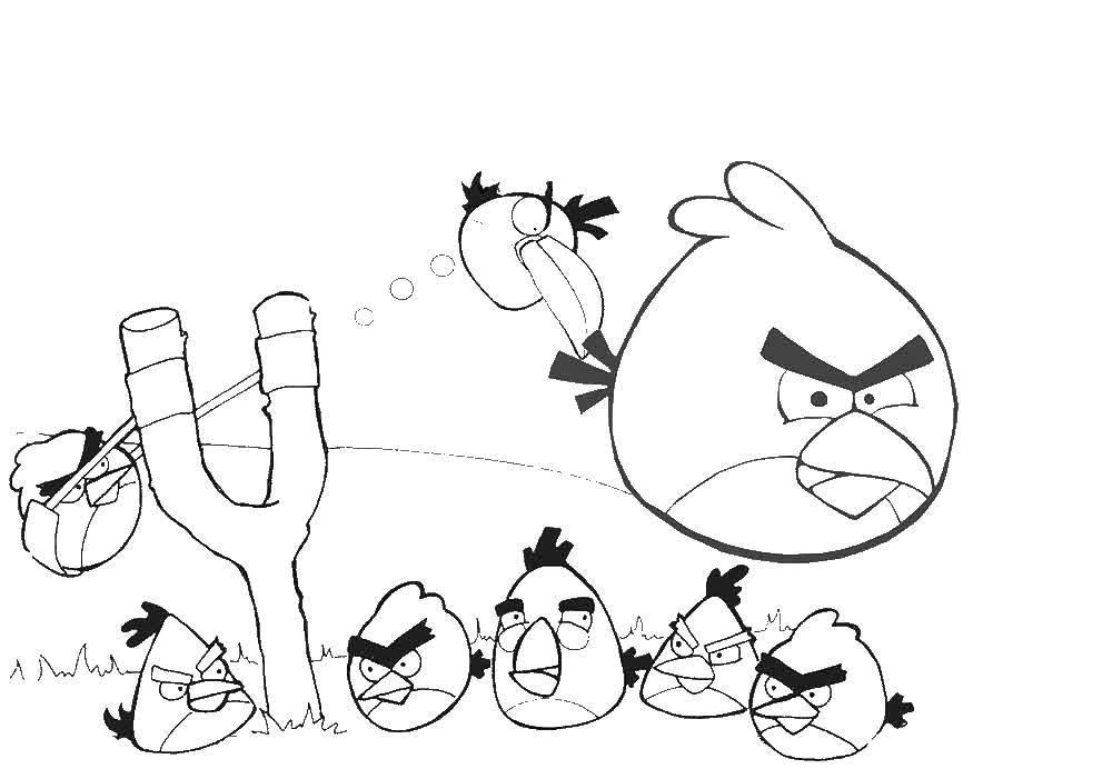 Раскраска Andry birds, игра Скачать Angry Birds, персонаж из игры.  Распечатать ,Персонаж из игры,