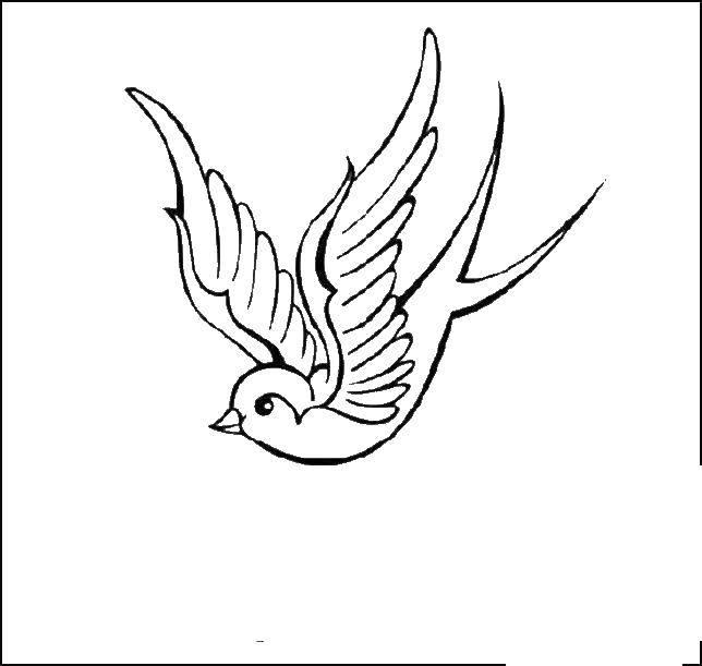 Раскраска птица Скачать ,ласточка, птичка,.  Распечатать