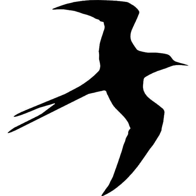 Раскраска Черный контур ласточки Скачать ласточки, птицы.  Распечатать ,Контуры для вырезания птиц,