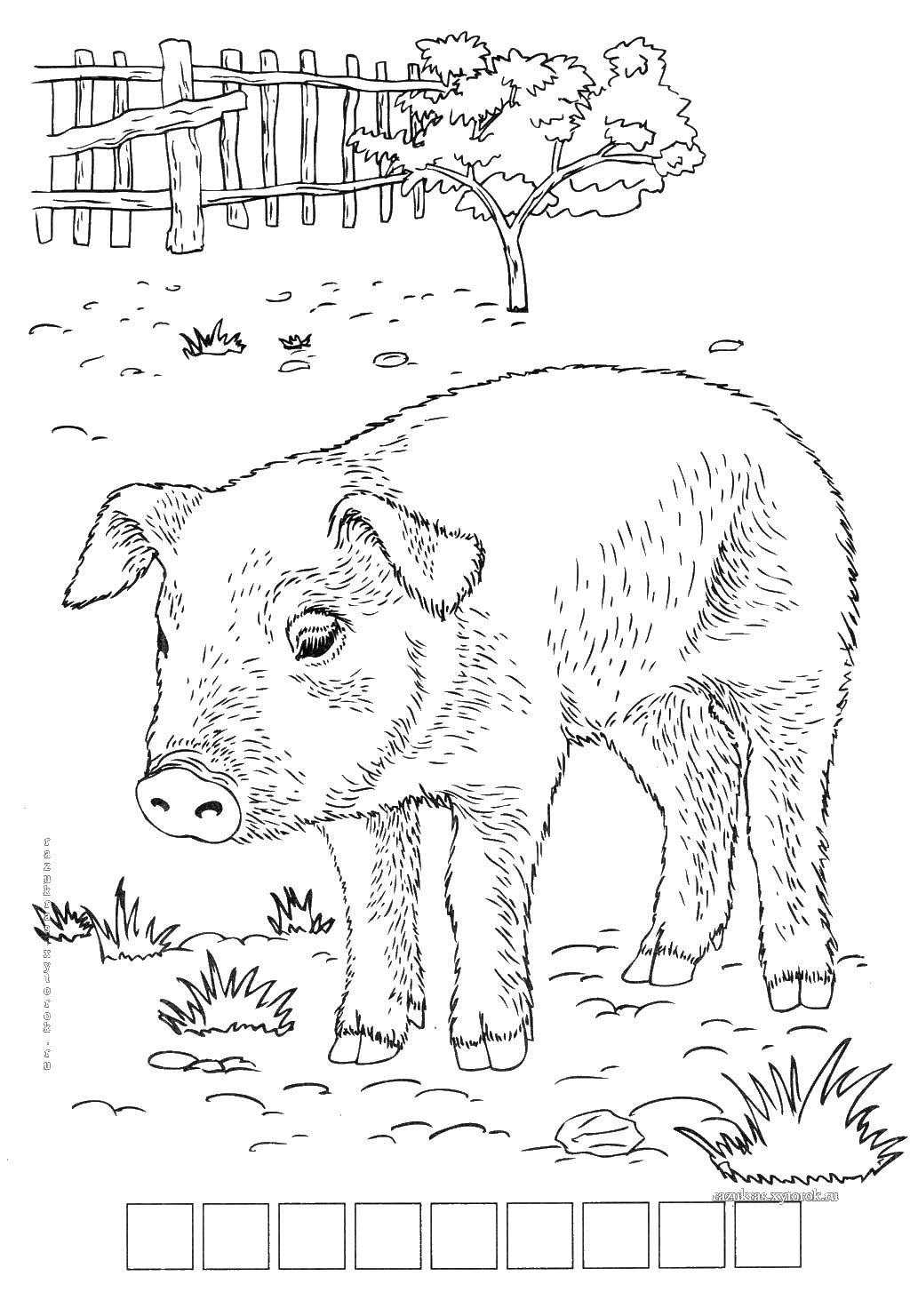 Раскраска Грустный поросёнок Скачать Животные, свинка.  Распечатать ,домашние животные,