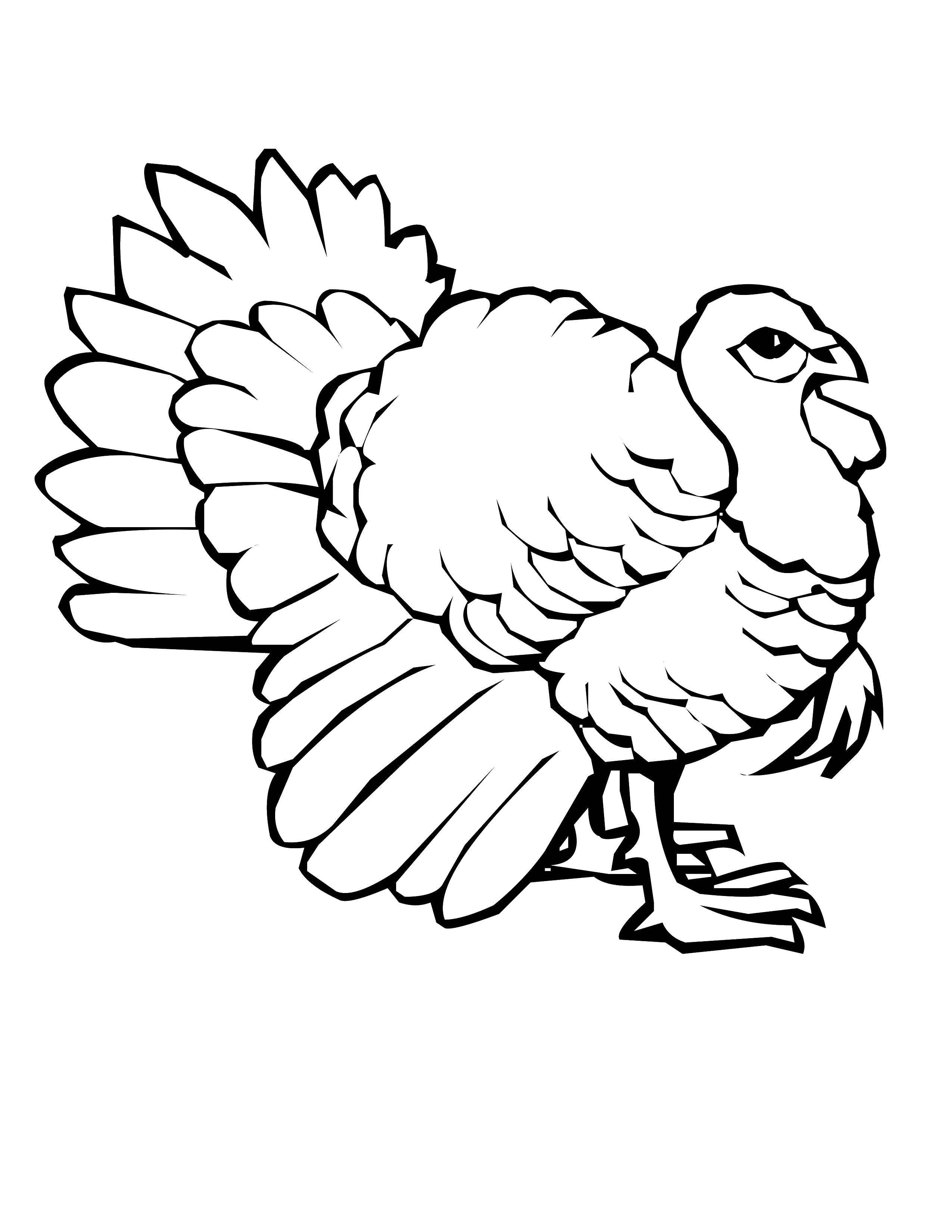 Раскраска Индюшка с большим хвостом. Скачать Птицы, индюшка.  Распечатать ,птицы,
