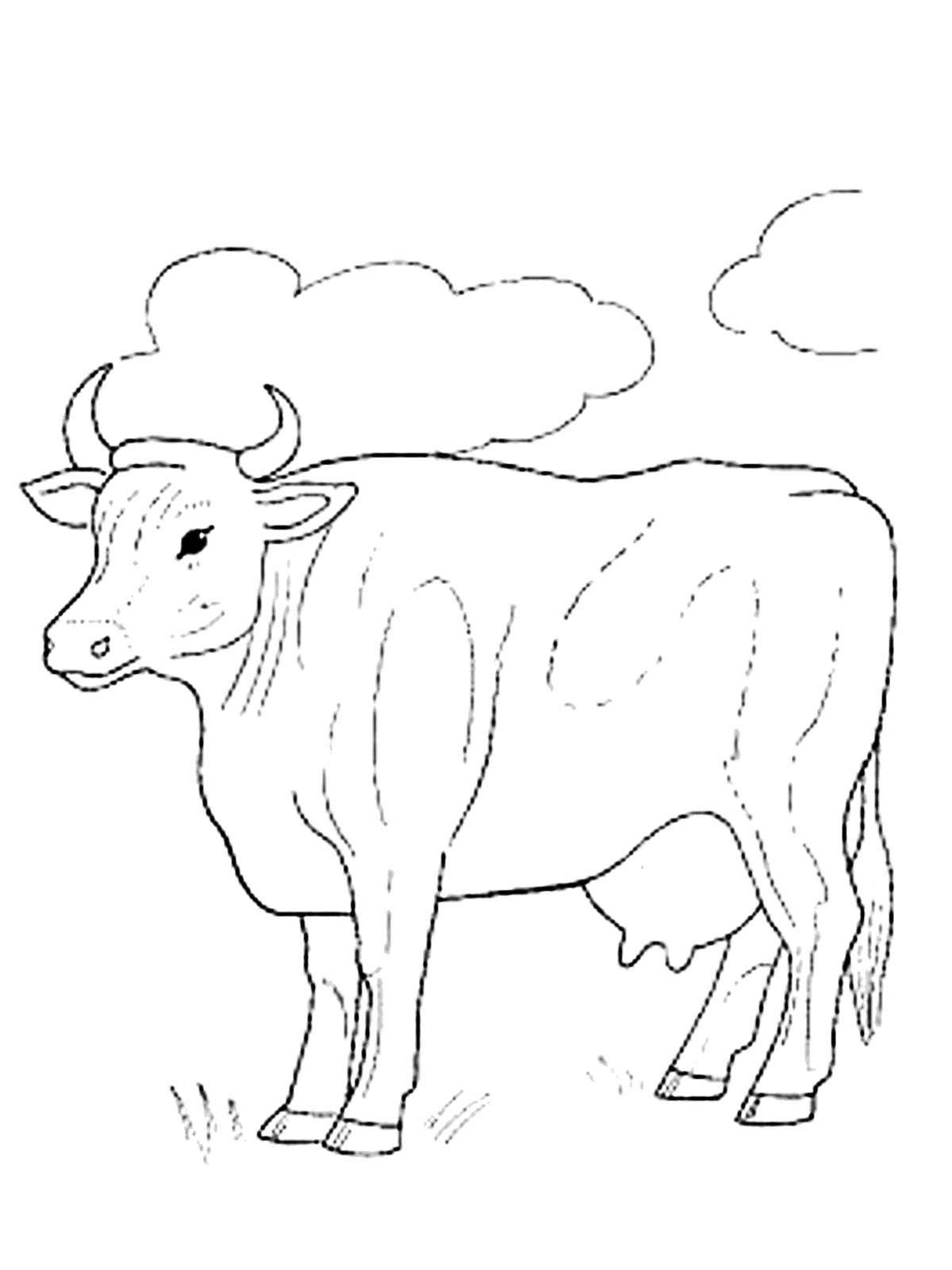 Раскраска домашние животные Скачать .  Распечатать