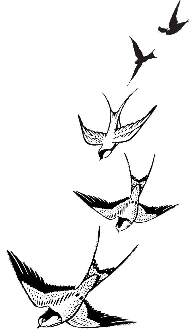 Раскраска Парящие ласточки Скачать Птицы.  Распечатать ,Контуры для вырезания птиц,