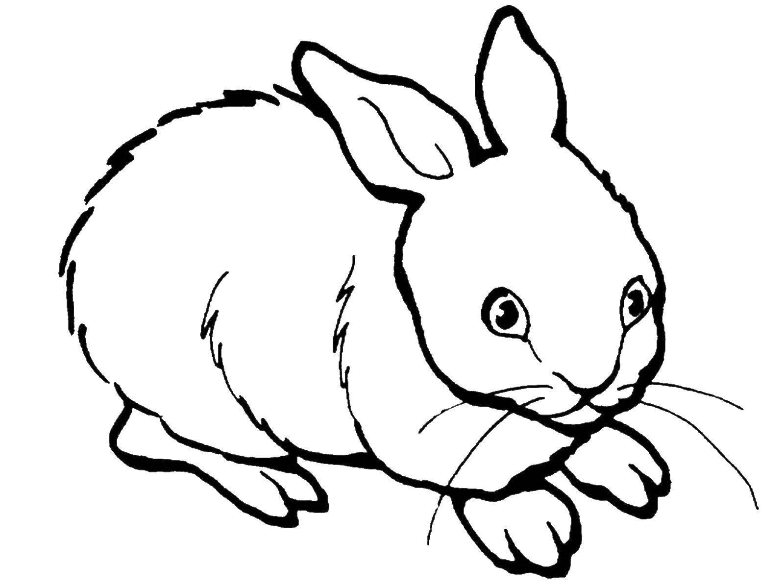 Раскраска Трусишка Скачать Животные, зайчик.  Распечатать ,домашние животные,