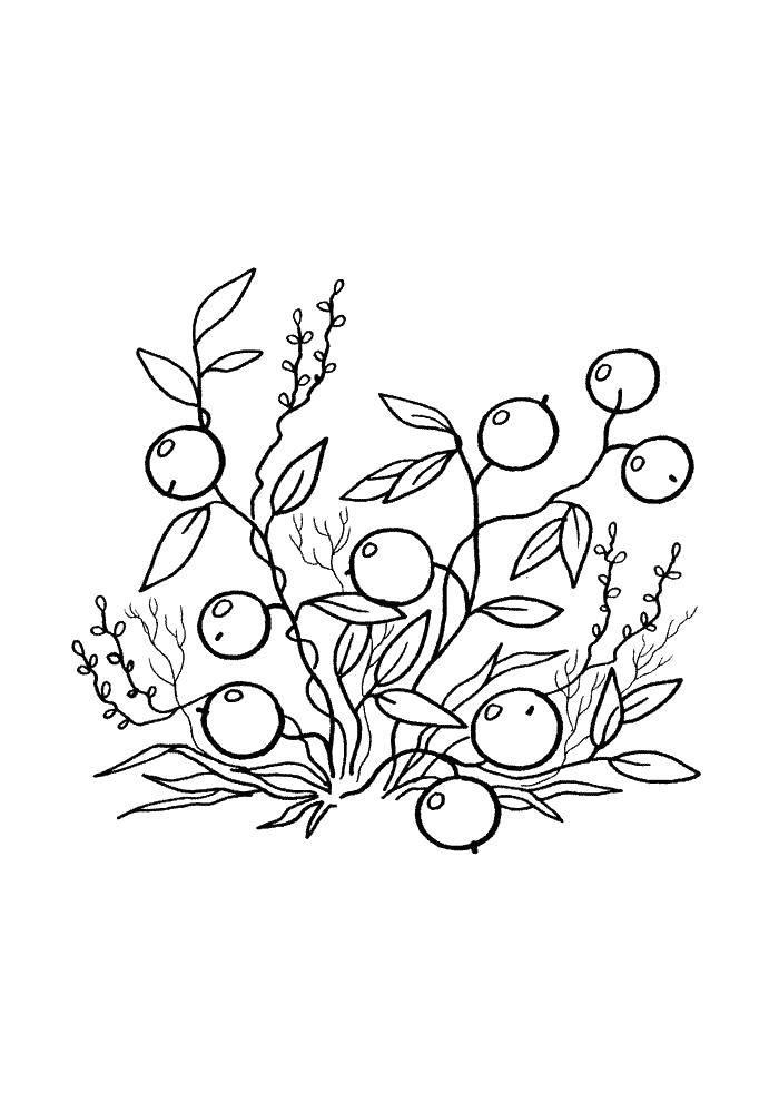 Раскраска Ягоды смородинки Скачать Ягоды.  Распечатать ,ягоды,