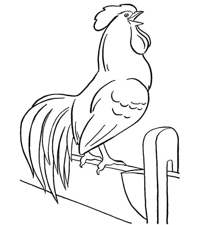 Раскраска птицы Скачать платья, бусы, девушка.  Распечатать ,Платья,