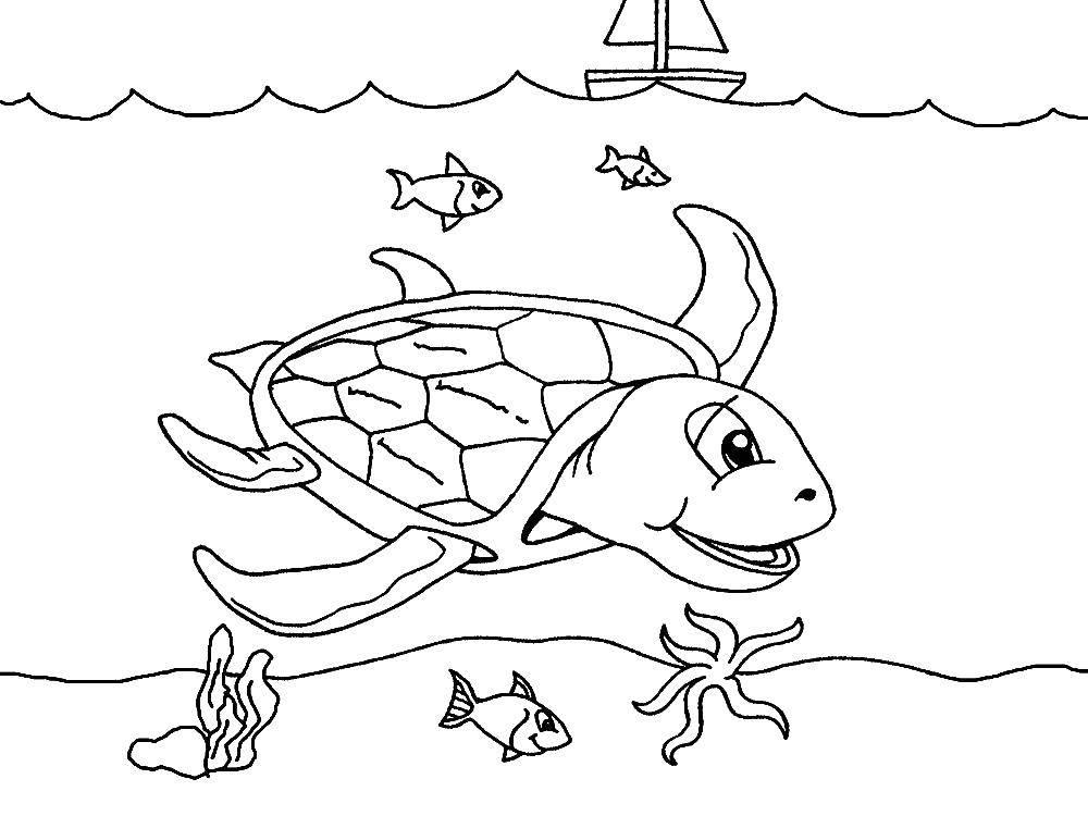 Раскраска морское Скачать .  Распечатать