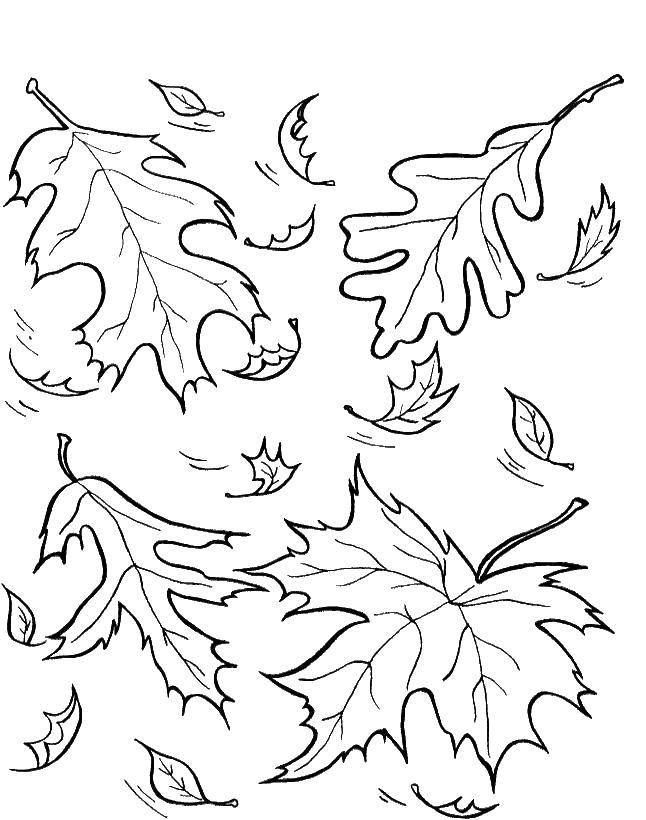 Раскраска Листва Скачать осень, листва, листья.  Распечатать ,осень,