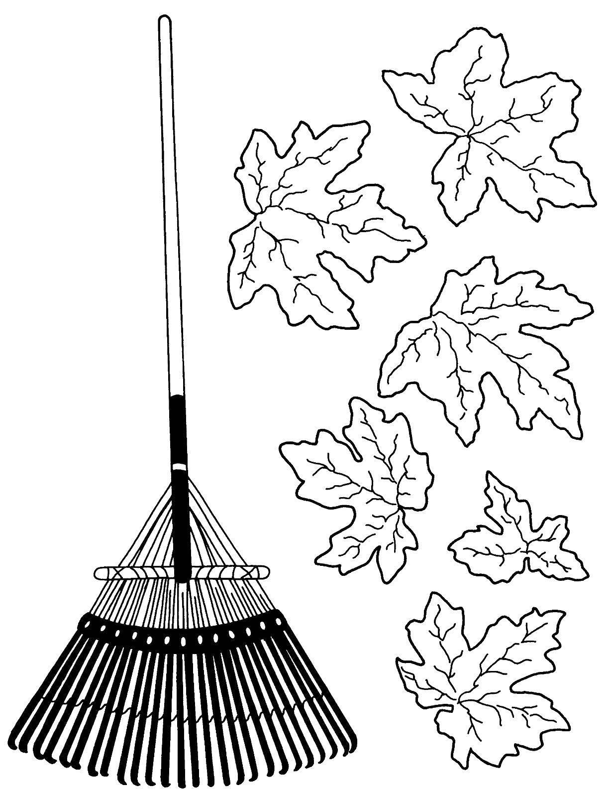 Раскраска Веник и листва Скачать осень, листва, веник.  Распечатать ,осень,