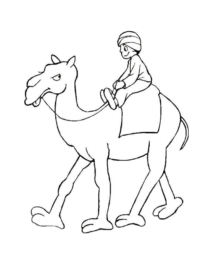 Раскраска Мальчик на верблюде Скачать верблюд, мальчик, животные.  Распечатать ,Животные,