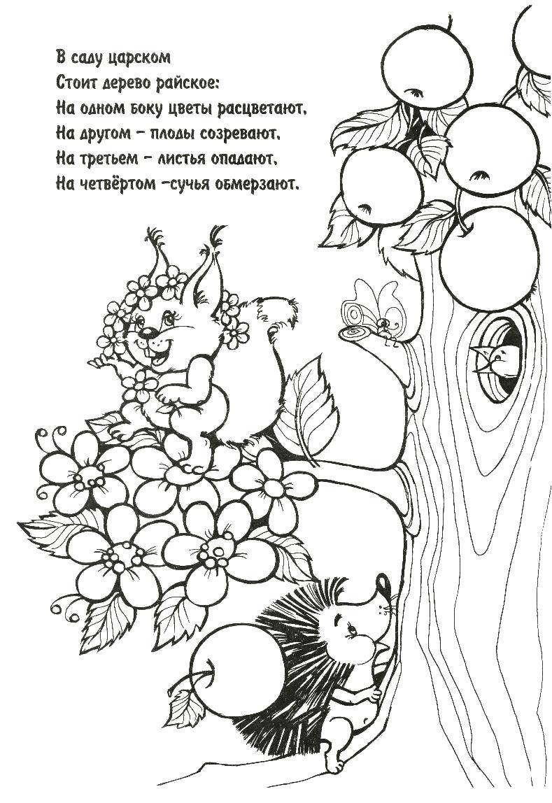 Раскраска Райское дерево Скачать загадка, загадки.  Распечатать ,загадки раскраски,