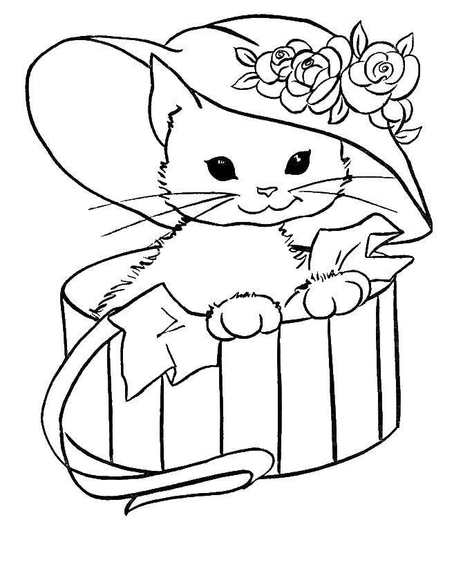Раскраска Кошка в шляпной коробке. Скачать животные, коробка, кошка.  Распечатать ,животные,