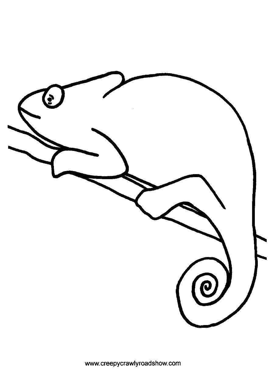 Раскраска рептилии Скачать ,математика, загадка,.  Распечатать
