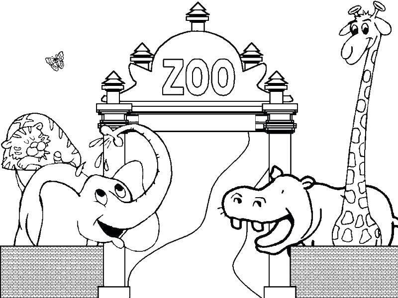 Раскраска Слон, тигр, бегемот и жираф в зоопарке Скачать Животные в зоопарке.  Распечатать ,зоопарк,
