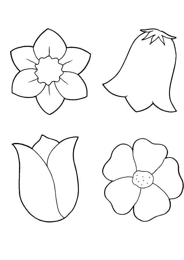 раскраски раскраска бутоны цветов цветы раскраски цветы