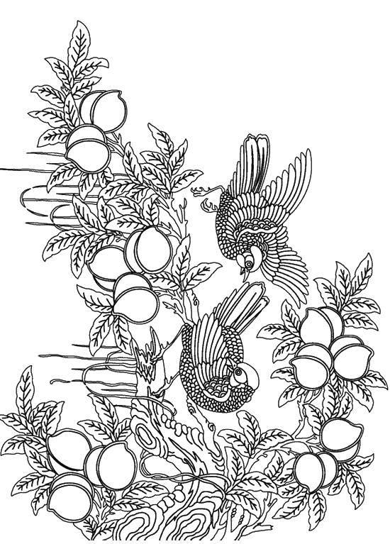 Раскраска птицы Скачать Животные, зайчик.  Распечатать ,кролик,