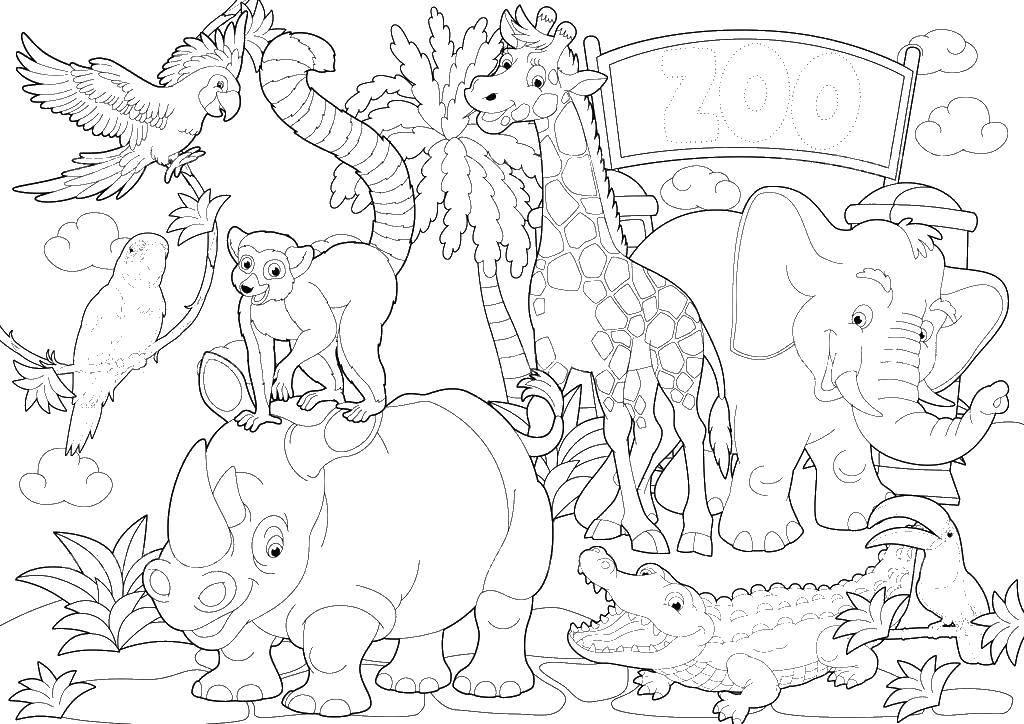 Раскраска Веселые животные Скачать зоопарк, звери.  Распечатать ,зоопарк,