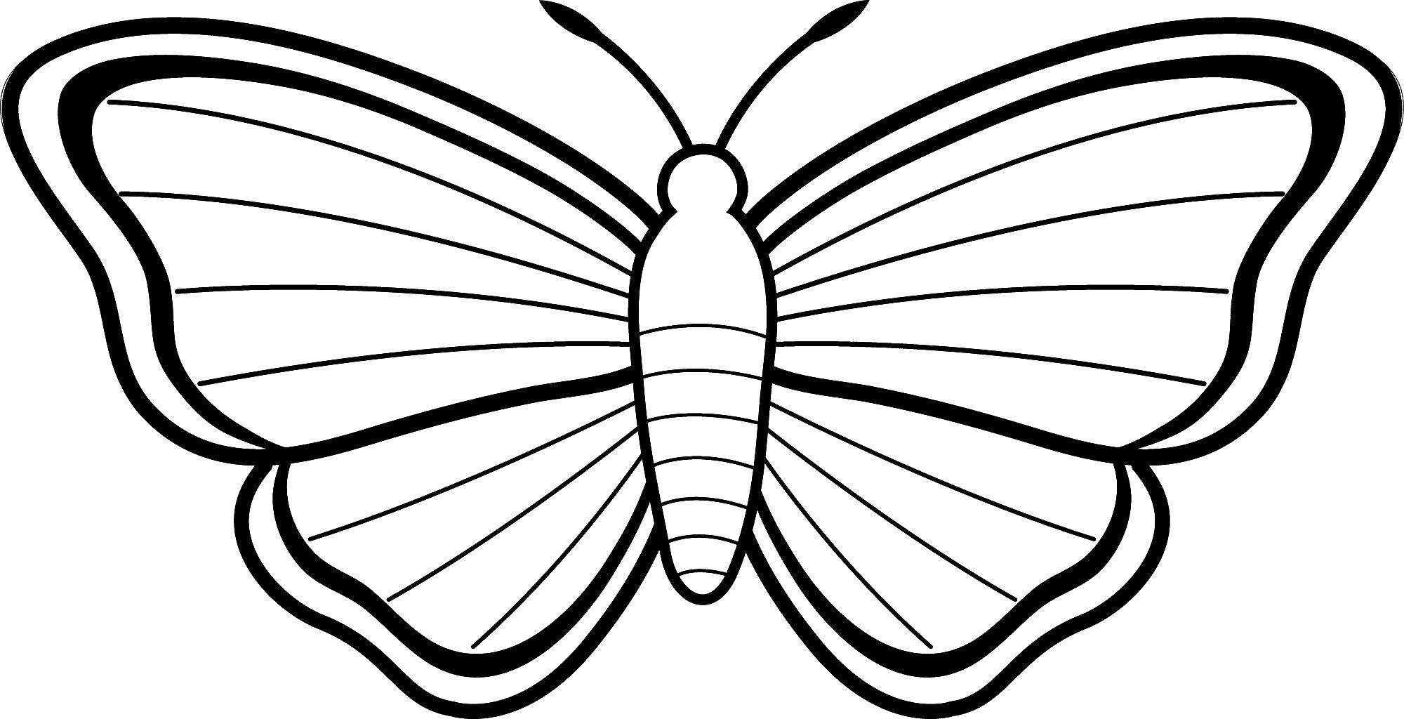 Раскраска бабочка Скачать ,насекомые, бабочка, бабочки, гусеница,.  Распечатать