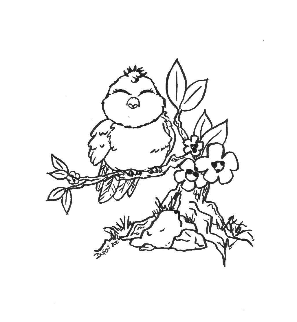 Раскраска птицы Скачать Мишка Тедди.  Распечатать ,мишки тедди,