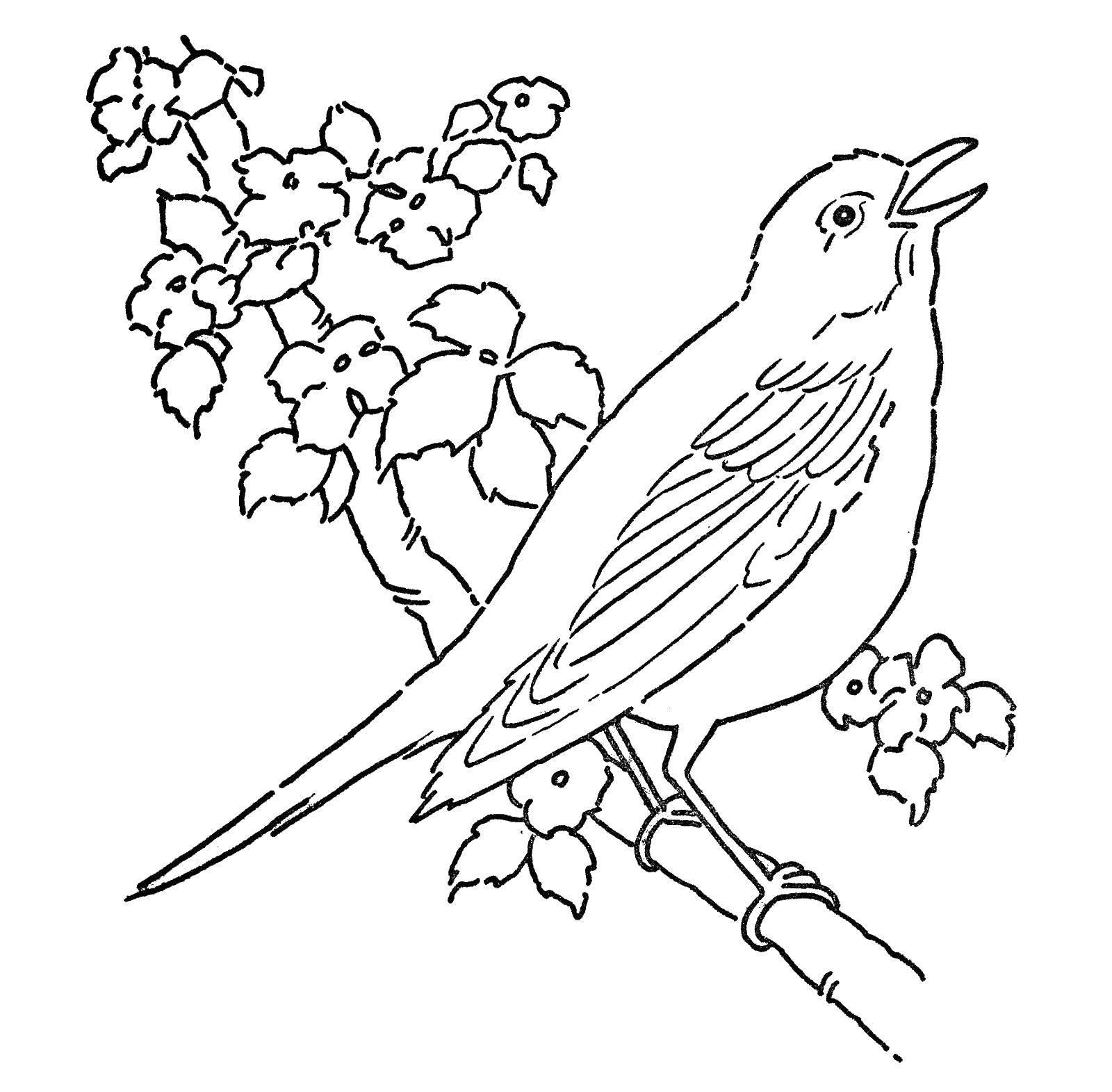 Раскраска Птичка поет, сидя на ветке. Скачать птицы, пение.  Распечатать ,Птицы,