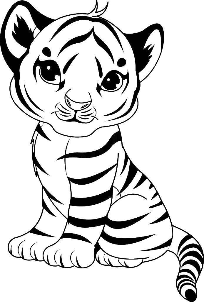 Раскраска детеныши животных Скачать ,тигренок,,.  Распечатать