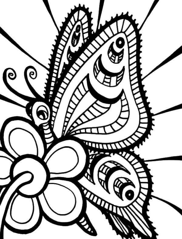 Раскраска Узорчатая бабочка Скачать бабочка, цветы.  Распечатать ,бабочка,