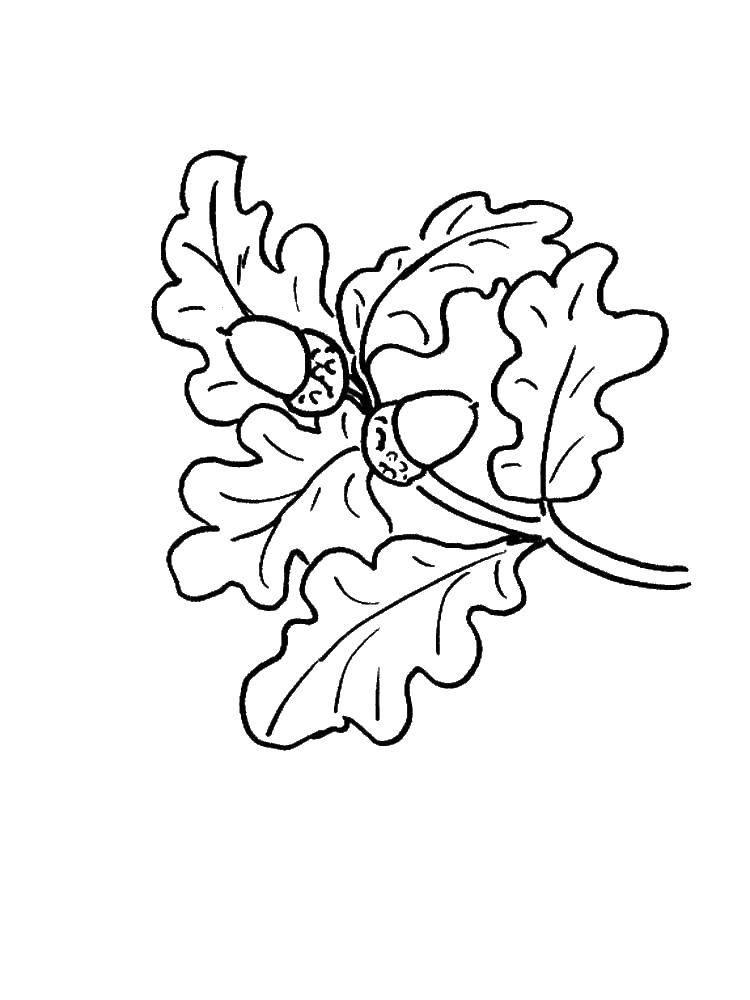 Раскраска листья Скачать единорог, крылья, хвост.  Распечатать ,раскраски,