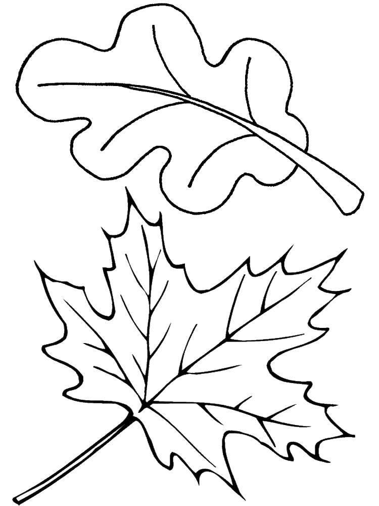 Раскраска листья Скачать ,солдат, война, танк,.  Распечатать