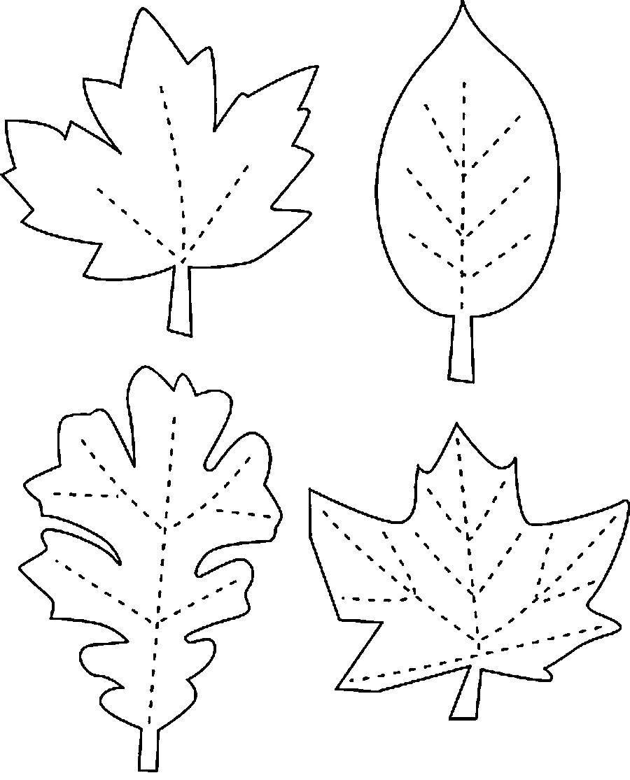 Раскраска Контуры листьев Скачать Животные, котёнок.  Распечатать ,котики,