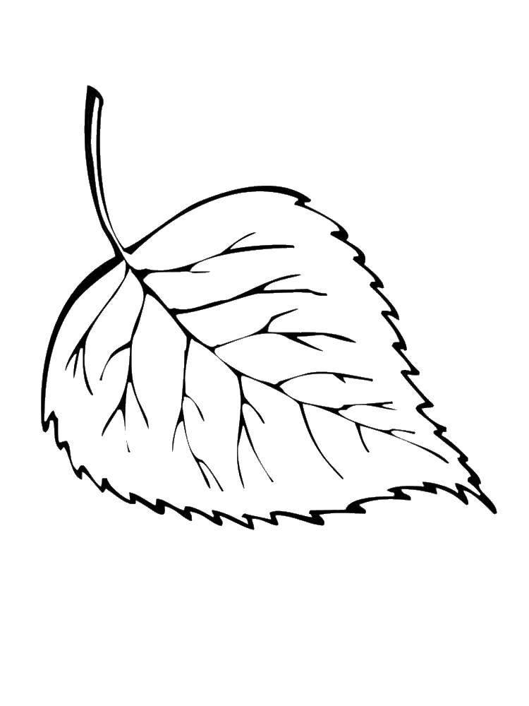 раскраски раскраска лист упал с берёзы листья сайт раскрасок