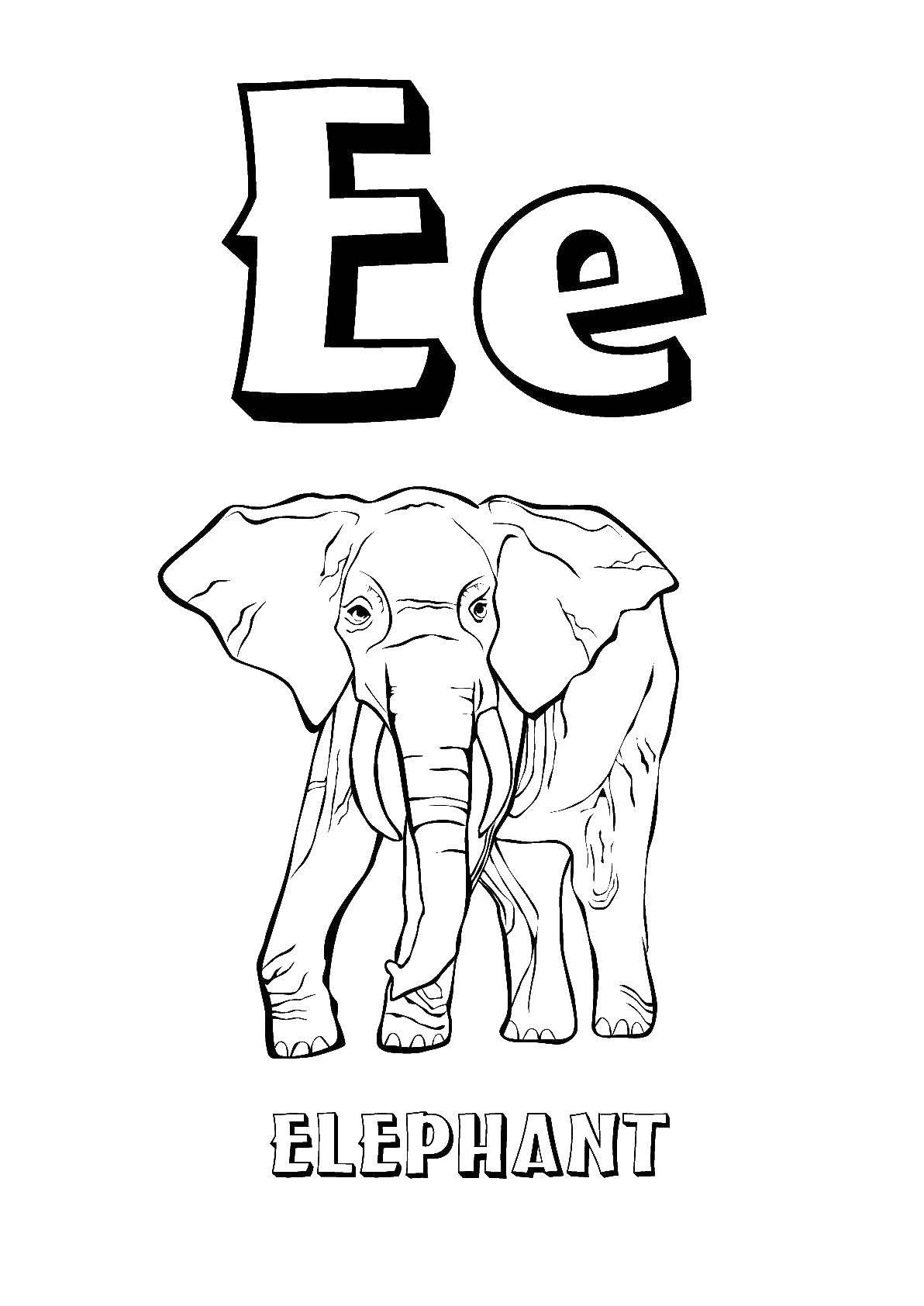 Раскраска Английские слова слон Скачать Английские слова , слон.  Распечатать ,Английский,