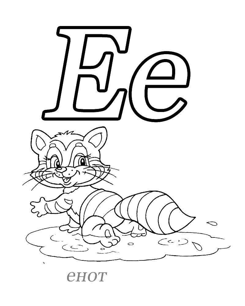 Раскраска Е енот Скачать Алфавит, буквы, слова.  Распечатать ,азбука,