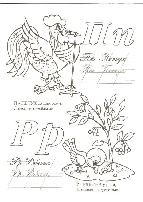 Раскраска П петух, р рябина Скачать Алфавит, буквы, слова.  Распечатать ,азбука,