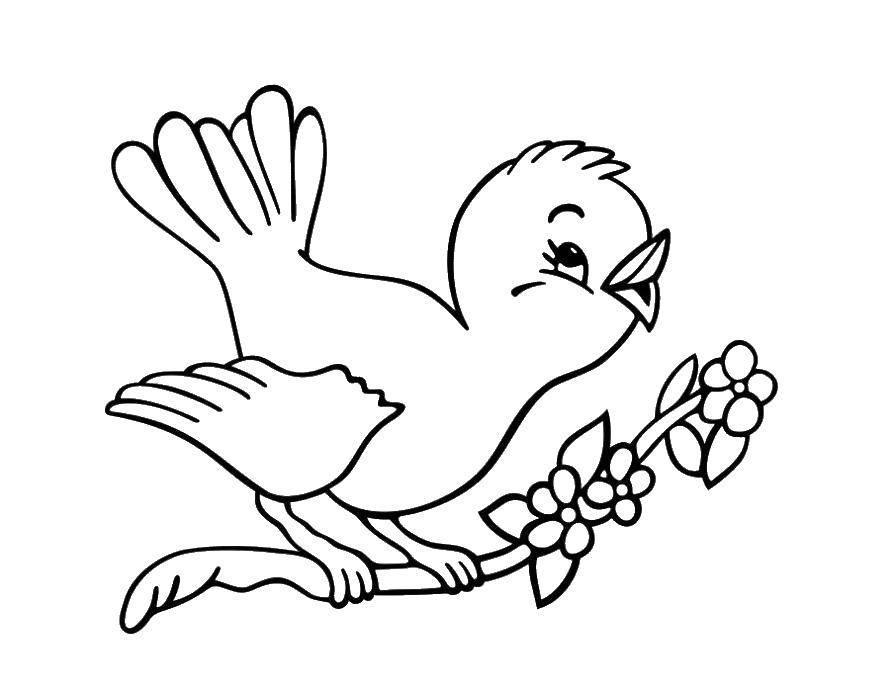 Раскраска Птичка поёт на веточке Скачать Птицы.  Распечатать ,весна,
