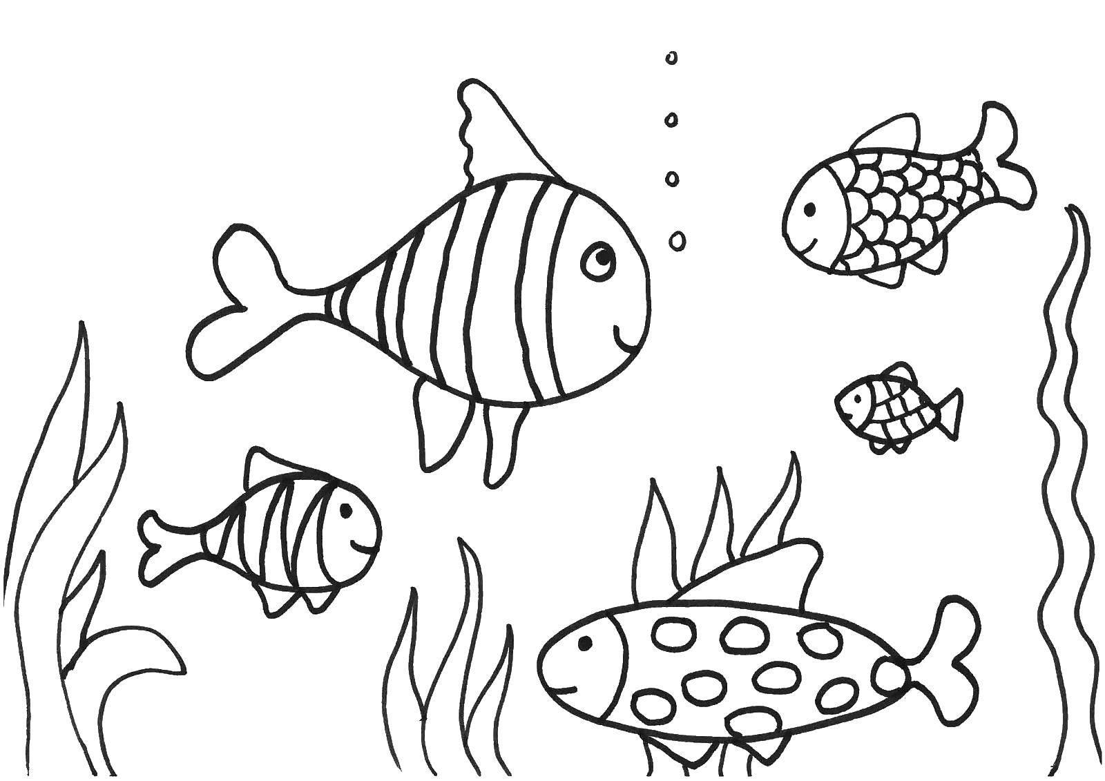 Раскраска Рыбки в воде Скачать рыбы, вода, море, рыбки.  Распечатать ,рыбы,