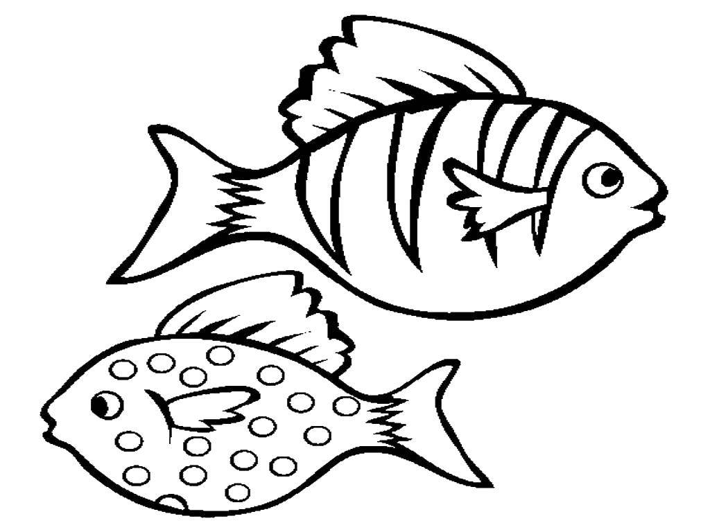 Раскраска Рыба в крапинку и полосатая рыбка Скачать Подводный мир, рыба.  Распечатать ,Контуры рыб,