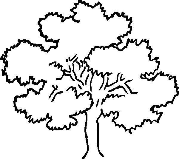 Раскраска Лиственное деревце Скачать Деревья, лист.  Распечатать ,дерево,