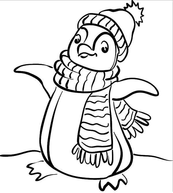 Раскраска Пингвин в шапке Скачать пингвин, шапка, шарф.  Распечатать ,раскраски зима,