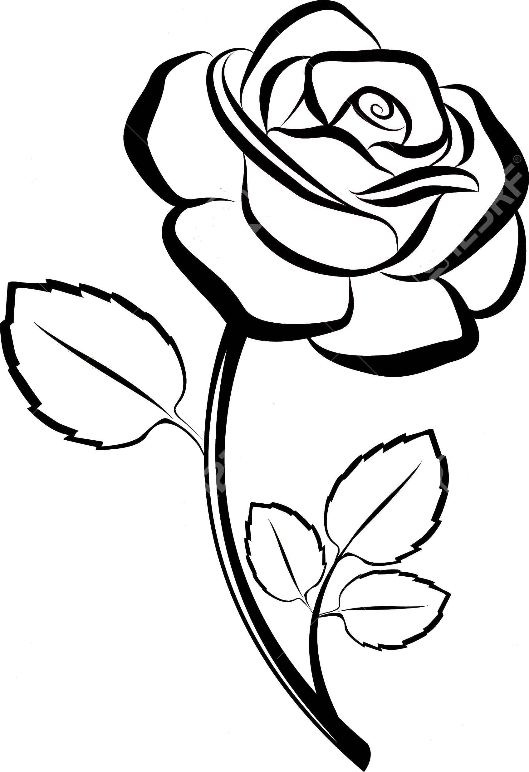 Раскраска Роза с листьями Скачать роза, листья, листики.  Распечатать ,Контуры розы,