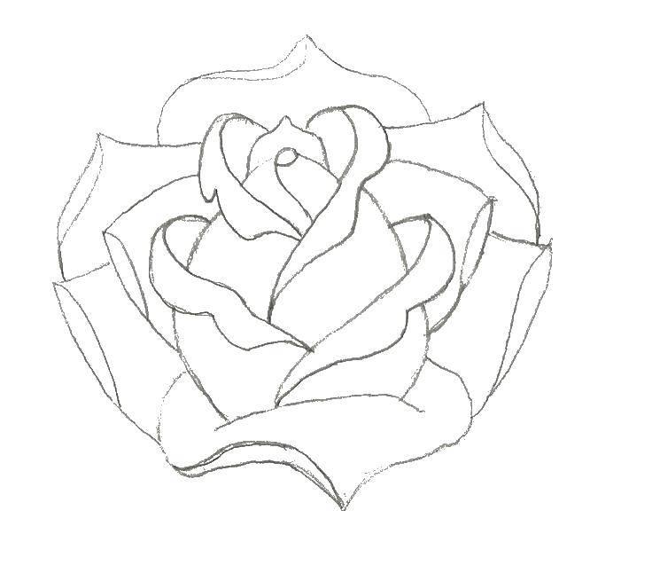 Раскраска Контуры розы Скачать Игры, Майнкрафт.  Распечатать ,майнкрафт,