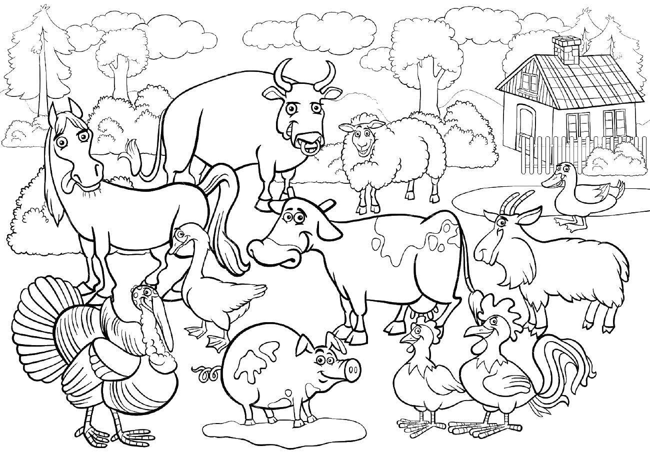 Раскраска Ферма с животными Скачать ,ферма, животные,.  Распечатать