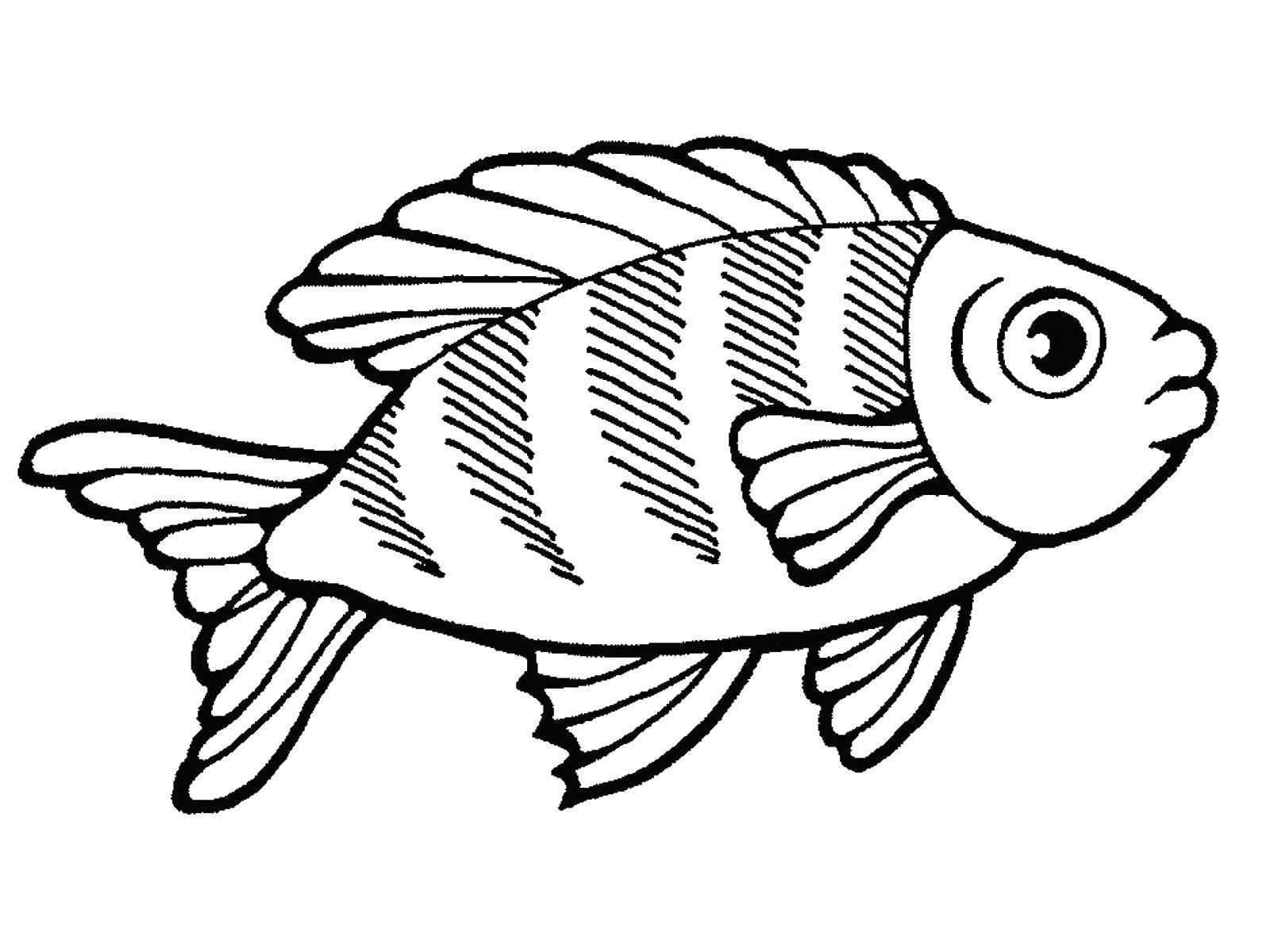 Раскраска рыбы Скачать Животные, свинка.  Распечатать ,Животные,