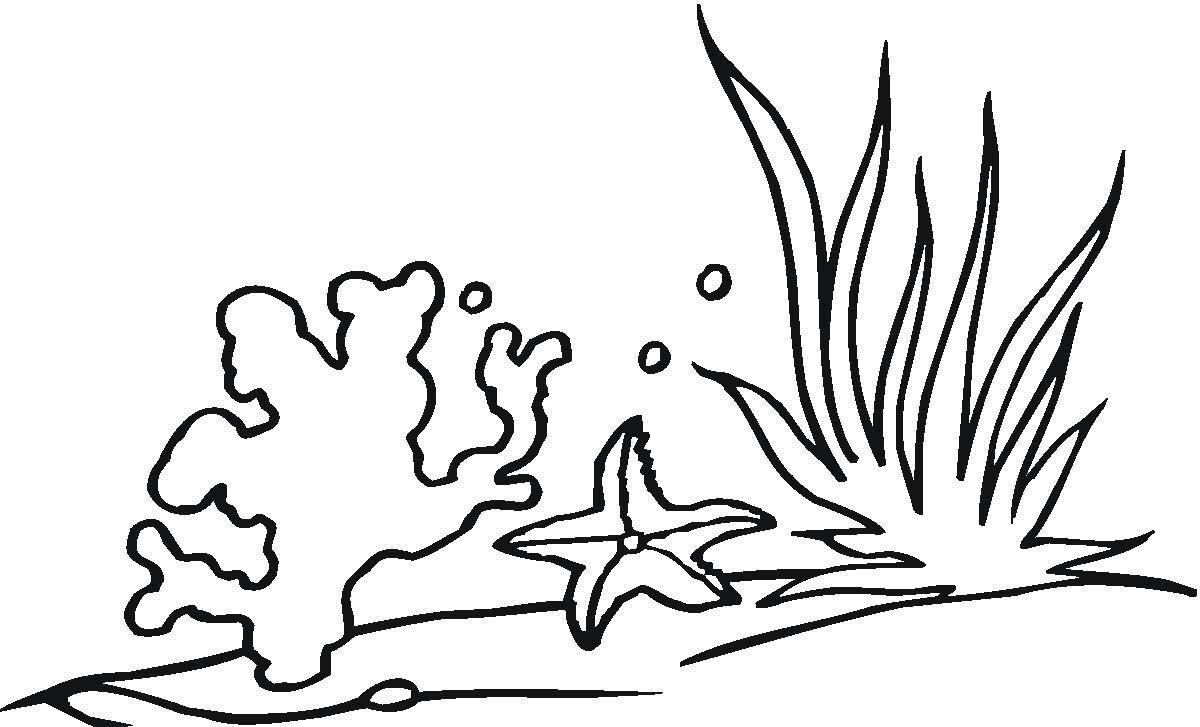 Raskraski Korally Raskraska Korally V Vode Vodorosli