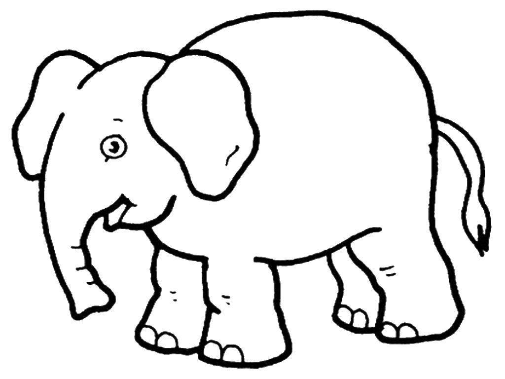 Раскраска Животные Скачать Персонаж из мультфильма, Winx.  Распечатать ,Винкс клуб,