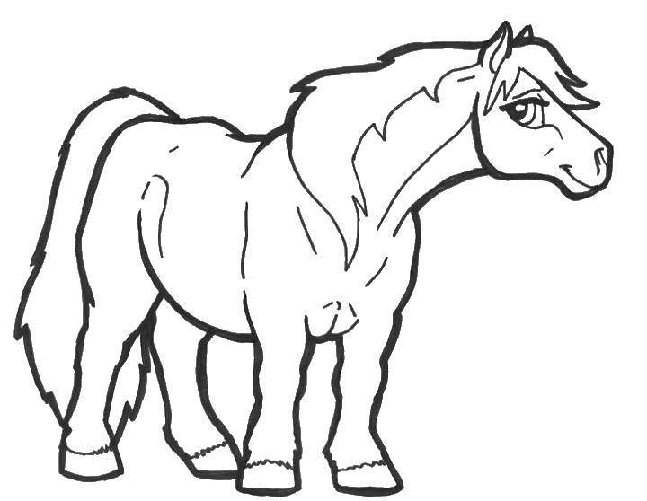 Раскраска Сильная лошадь Скачать Лошадь.  Распечатать ,лошади,