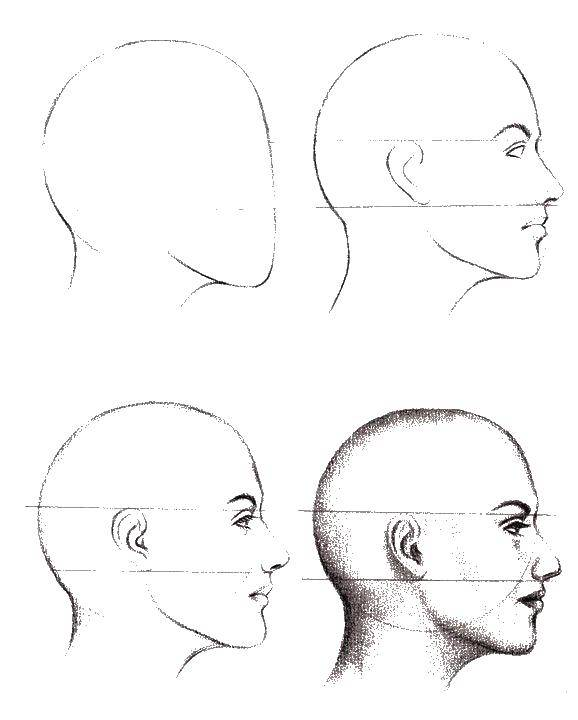Раскраска Как нарисовать профиль Скачать как нарисовать, лицо, профиль.  Распечатать ,как нарисовать пошагово,