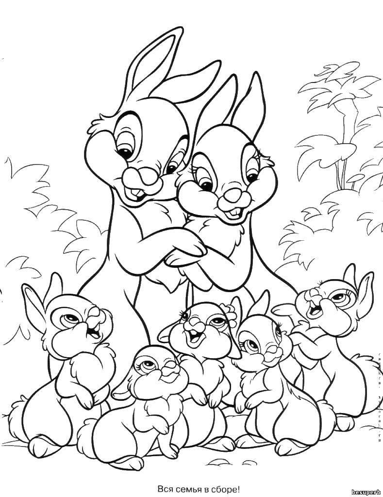 Раскраска Кролики семеиства Скачать кролики, кролчики.  Распечатать ,семья животных,